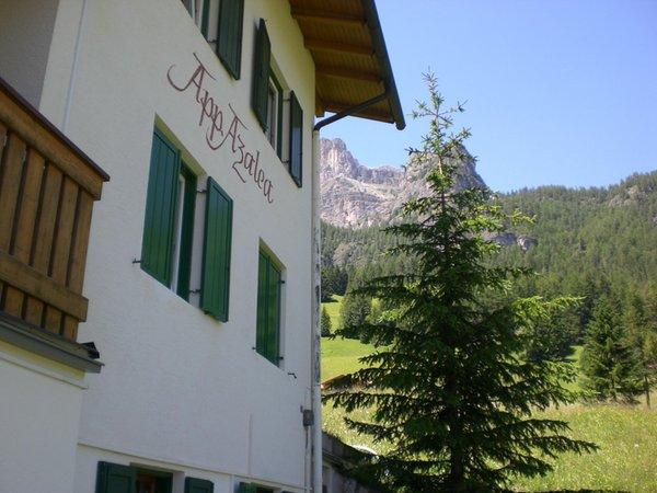 Foto estiva di presentazione Appartamenti Azalea