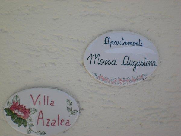 Foto di alcuni dettagli Azalea