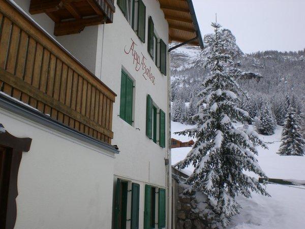 Foto esterno in inverno Azalea