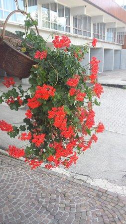 Photo of the garden Mezzana