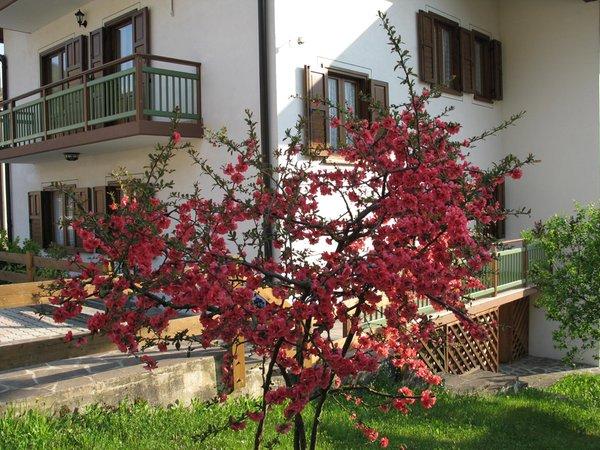 Foto esterno in estate Apartment Relax Natura