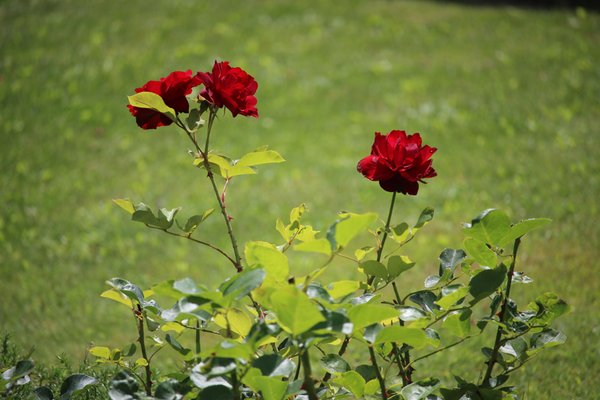 Foto del giardino Almazzago (Commezzadura - Daolasa)