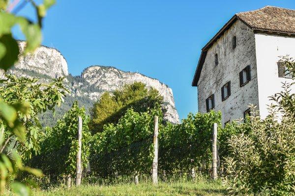Foto del giardino Appiano Monte (Strada del Vino Nord)