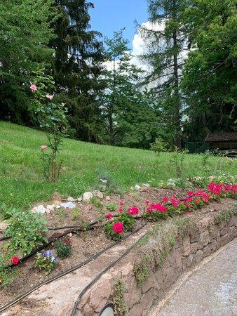 Foto del giardino Masi di Cavalese